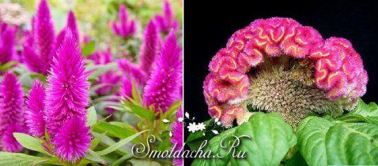 Какие цветы можно сажать в открытый грунт семенами 78