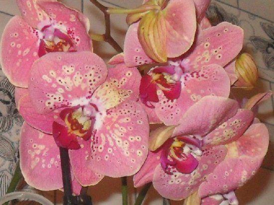 Домашние цветы как ухаживать за орхидеями в домашних условиях