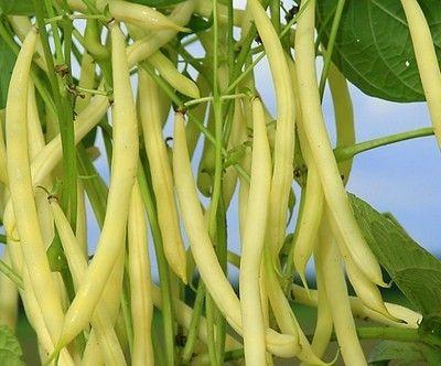 фасоль овощная