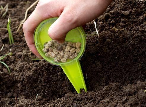 Когда сажать овощи. Сроки посадки семян основных 48