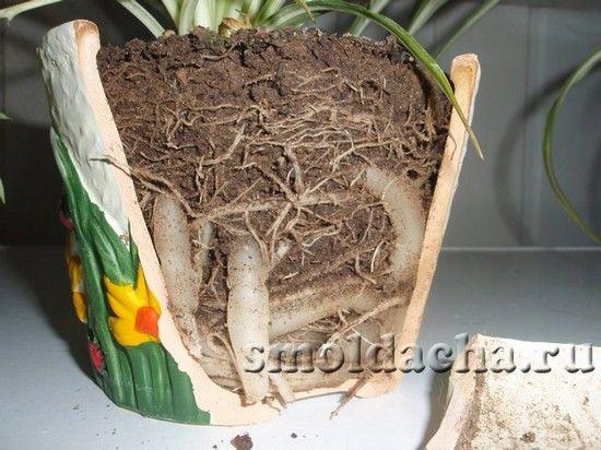 Сосиски в тесте. рецепт с пошаговым фото
