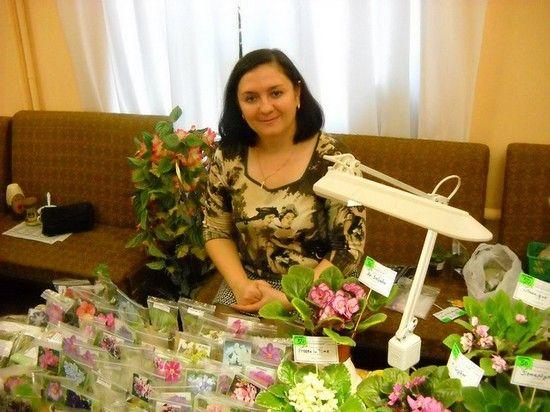 Комнатных растений сенполия