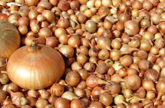Как сохранить лук севок — Овощные культуры