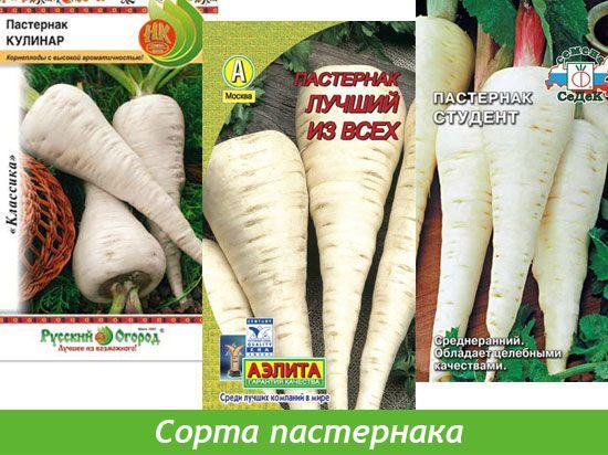 Пастернак выращивание из семян 82
