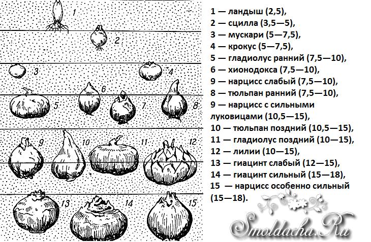 Вязание туники спицами с описанием и о схемами